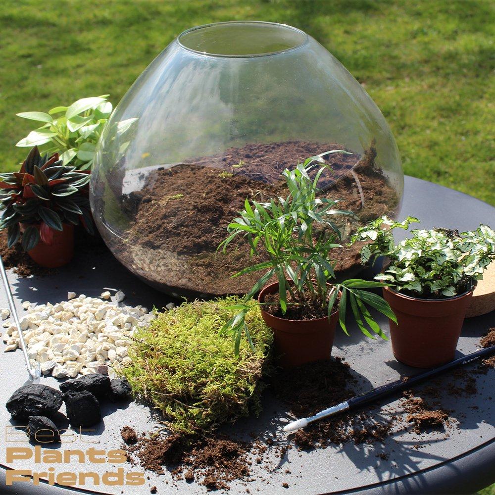Best Plants Friends B2B terrarium